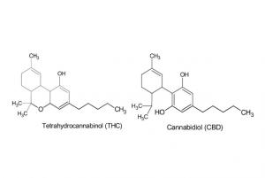 THC and CBD molecule drawings