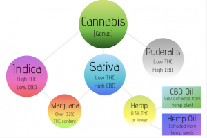 CBD Oil & Hemp Oil Extraction Chart