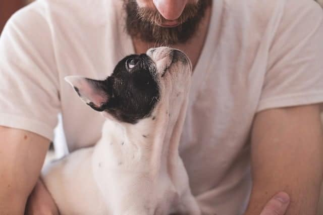 bearded man holding cute french bulldog puppy