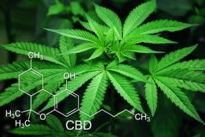 marijuana leafs with CBD molecule drawing