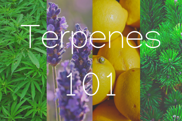 "Picture with letterings of ""Terpenes 101"" superimposed over a collage of hemp leaves, lavender, lemons & pine leaves in a column layout"
