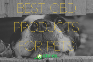 "Vector Graphic lettering of ""BEST CBD PRODUCTS FOR PETS"" supermiposed over an image of a dog's face"