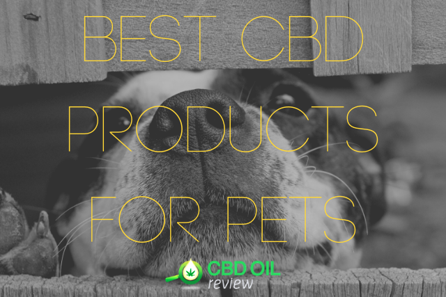 "Vector graphic lettering of ""BEST CBD PRODUCTS FOR PETS"" superimposed over an image of a dog's face"