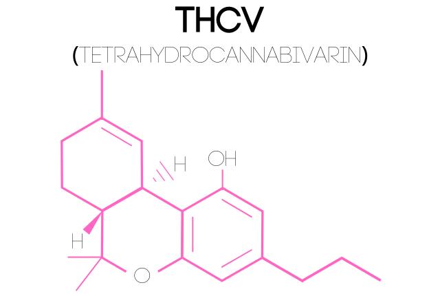 An illustration of a Tetrahydrocannabivarin (THCV) molecular structure