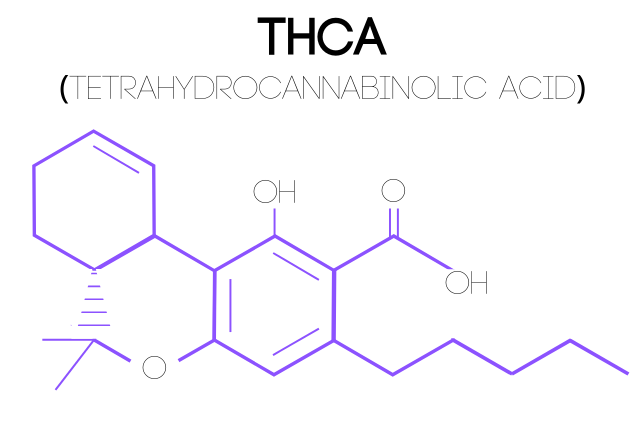 An illustration of a Tetrahydrocannabinolic Acid (THCA) molecular structure