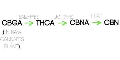 a flowchart of the chemical changes that occur when THCA (tetrahydrocannabinolic acid) changes to CBN (Cannabinol)