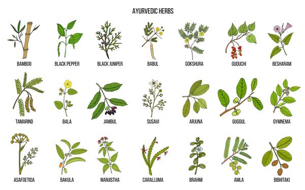 chart of ayurvedic herbs