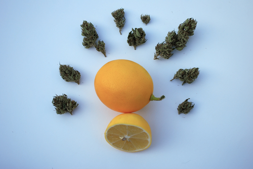 image of lemon and marijuana, both have limonene