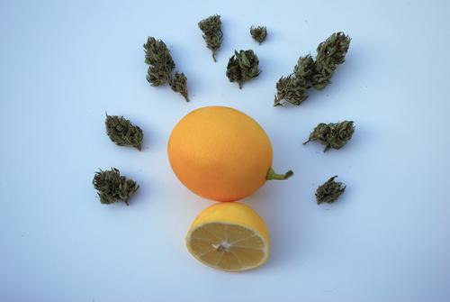 image of lemon and marijuana, both have limonene