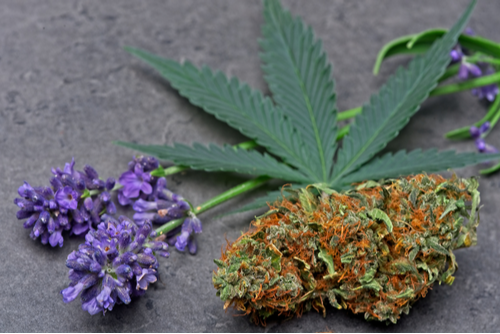 image of cannabis leaf, bud, and lavender