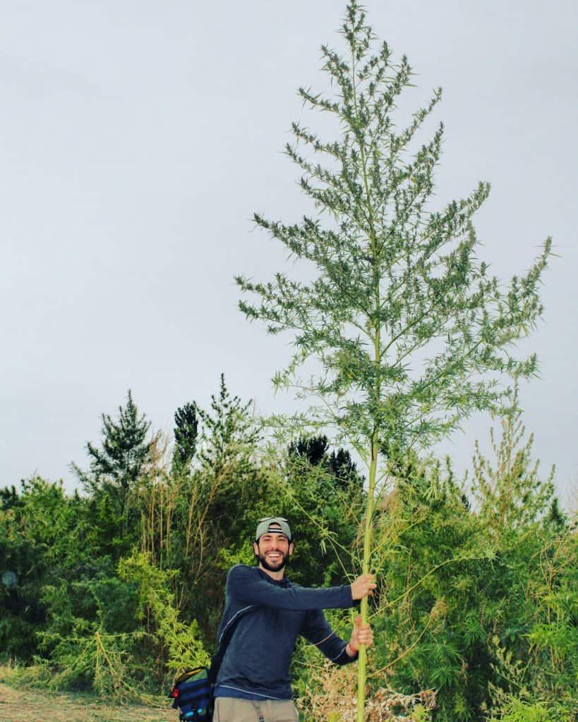 steve turetsky standing next to a 12-foot tall hemp plant in Kazakhstan