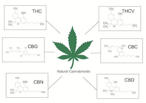 diagram of the different cannabinoids